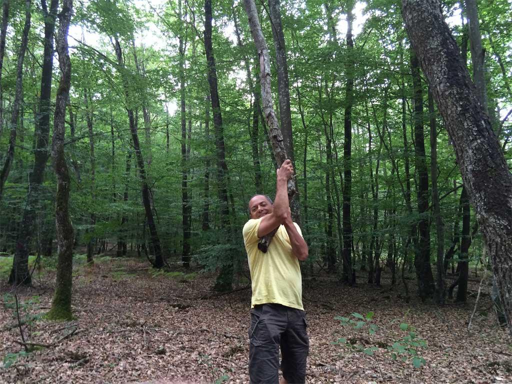 Ballade en forêt de Tronçais